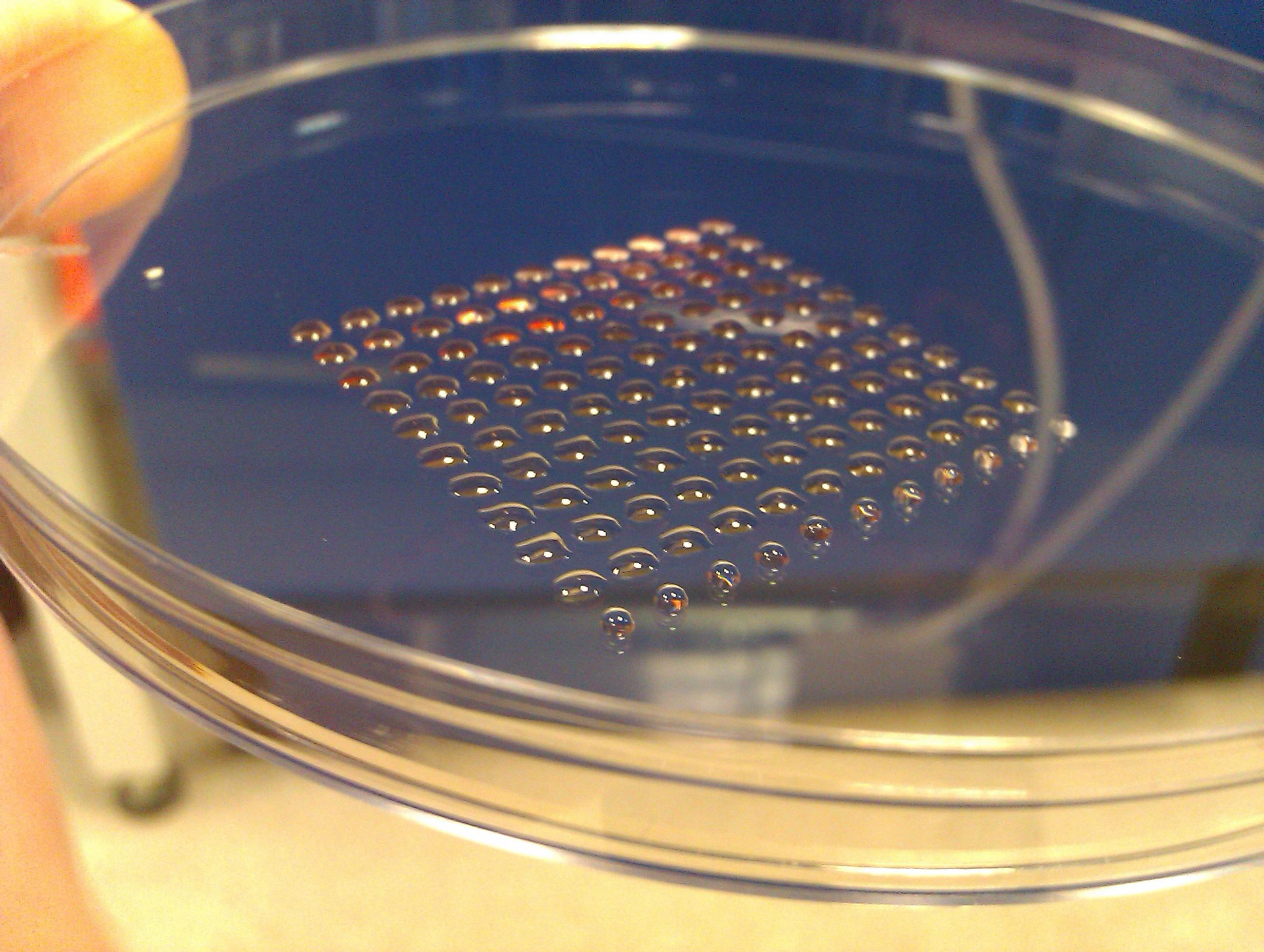 O bioimprimanta este folosita pentru a plasa cu precizie celule in straturi pentru a crea tesuturi